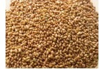GREEN FOODS ALFA ALFA SEEDS 100G BIO